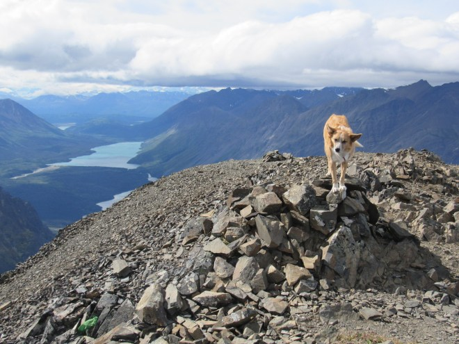 Lupe atop the summit cairn on King's Throne Peak! It was still breezy when Lupe arrived, but nothing like the gale she'd faced coming up. The views were stupendous in every direction! Louise Lake is seen in the huge valley below. Photo looks W.