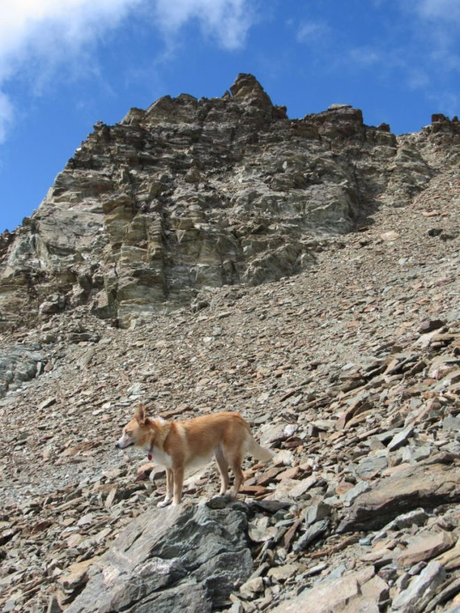 Lupe nears the first big rock formation. No wonder the Carolina Dog was so calm on this steep scree slope - she was keeping her eyes closed! Photo looks WNW.