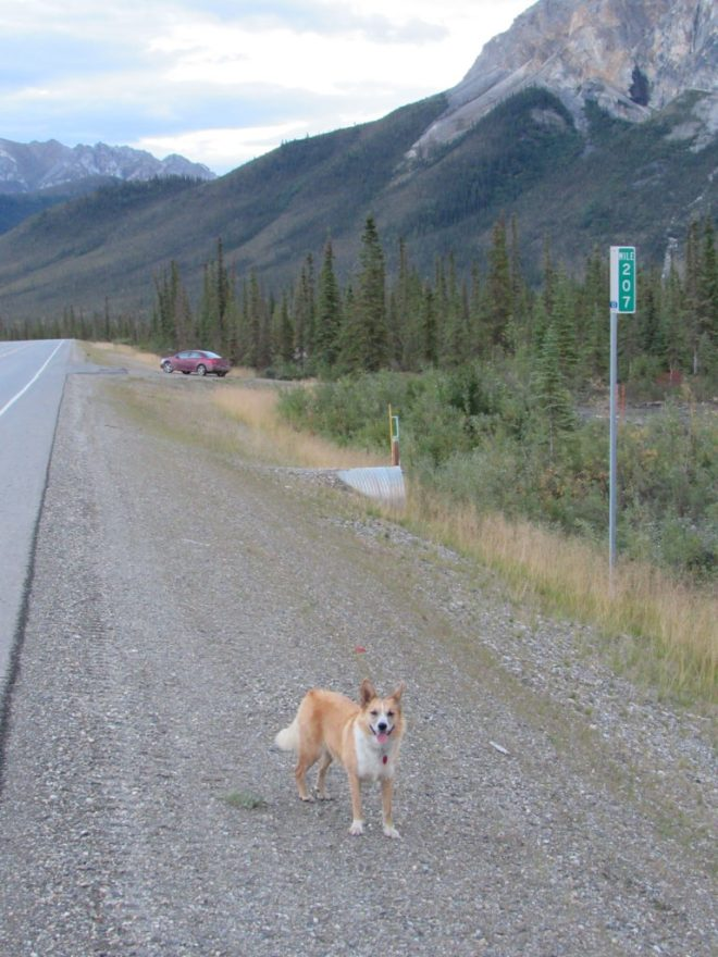 Lupe heads back to the G6, which is parked as far N as it would ever go beyond milepost 207 along the Dalton Highway. Photo looks NE.