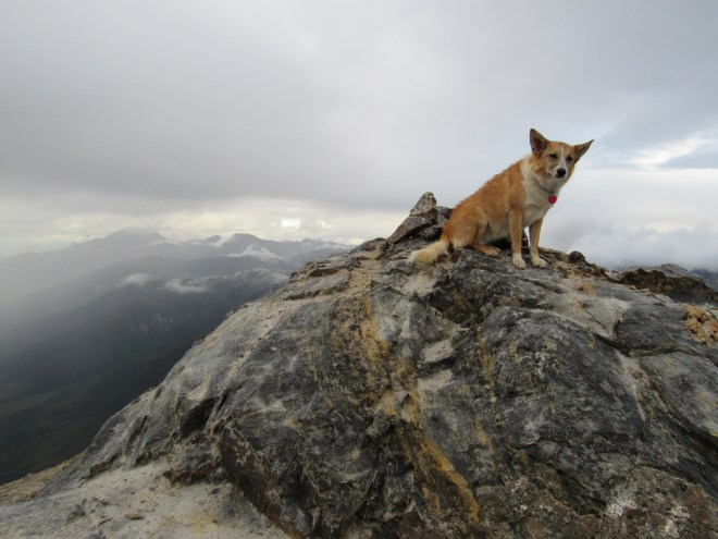 Lupe perched next to the summit cairn on Dillon Mountain, Brooks Range, Alaska (8-15-16). Photo looks WNW.