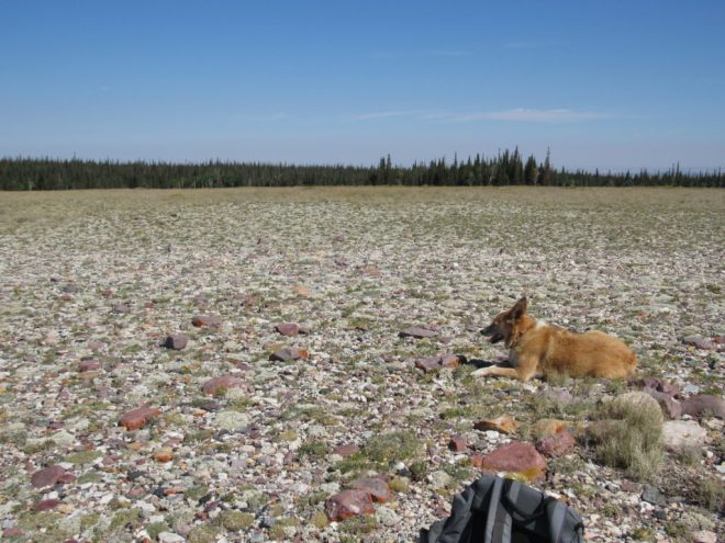 Wyoming – The (Mostly) True Adventures of Lupe