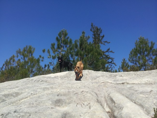 Willow and a doggie friend at the top of a large sandstone rock