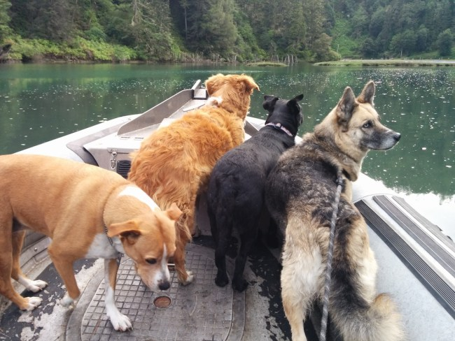 Four dogs in a zodiac