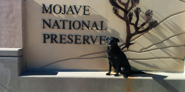 My dog sitting on the Mojave National Preserve entrance sign