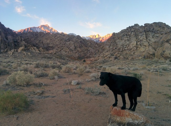 Dog standing on a rock with the Mount Whitney Range behind her