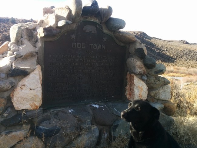 Dog sitting next to the Dog Town roadside marker and plaque