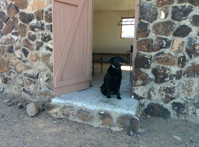 My dog sitting pretty in the doorway of the Kofa Cabin