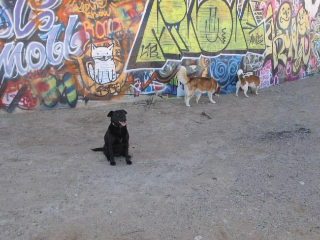 Willow, Amara and Herbie