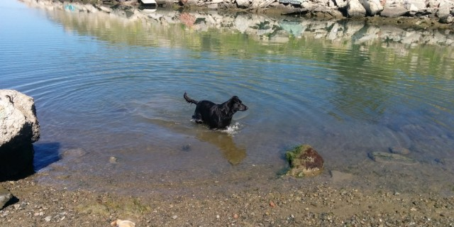 Willow wading in the water with Brandi waiting on the sand