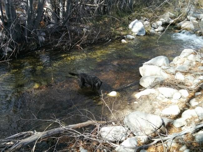 Willow in Bear Creek