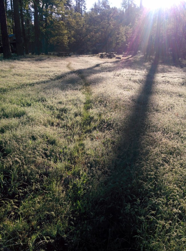 The Trail Left Behind In the Morning Dew on the grass By Willow's Passing