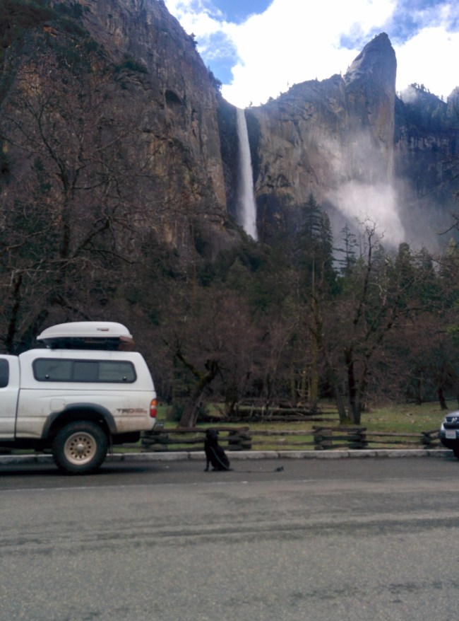 Willow in photo taken across Southside Drive next to the rear of the Tacoma with Bridalveil Falls in the Background