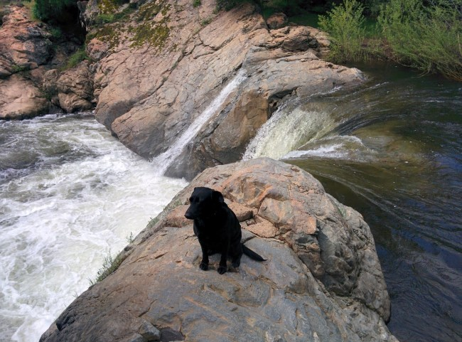 Willow sitting out on the rocky area at the top of the falls at Rainbow Pools