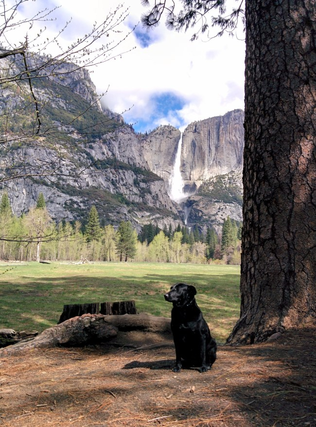 Yosemite Falls in the Background
