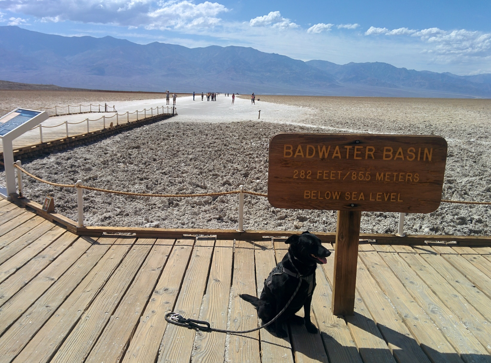 badwater basin adventures with dog