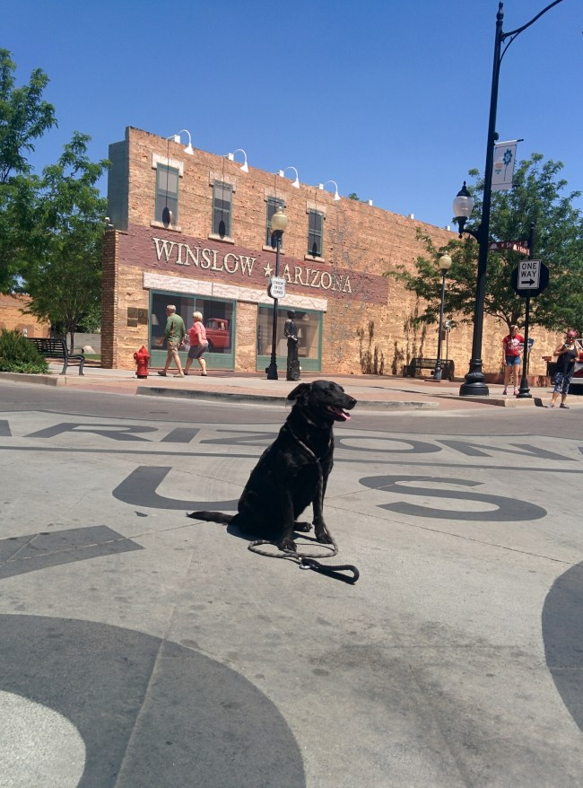 Willow Stopping Traffic by sitting On The large, painted Route 66 Sign In The Intersection