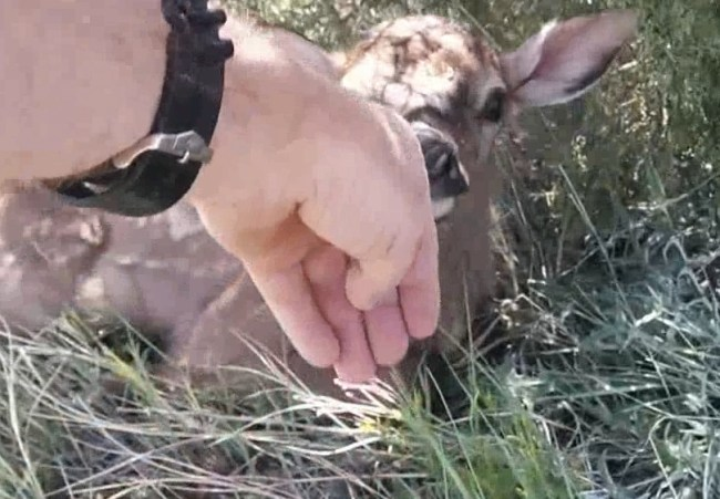letting a baby elk sniff my hand