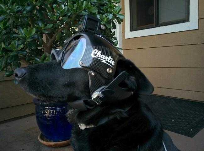 omdog prototypes02