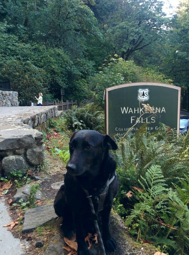 Willow at the Wahkeena Falls sign