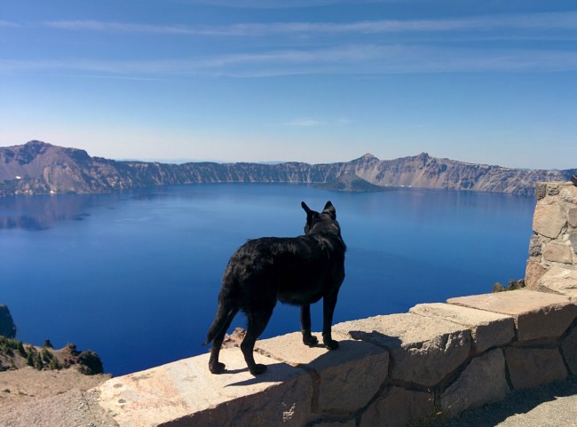 Willow at a windy overlook at Crater Lake