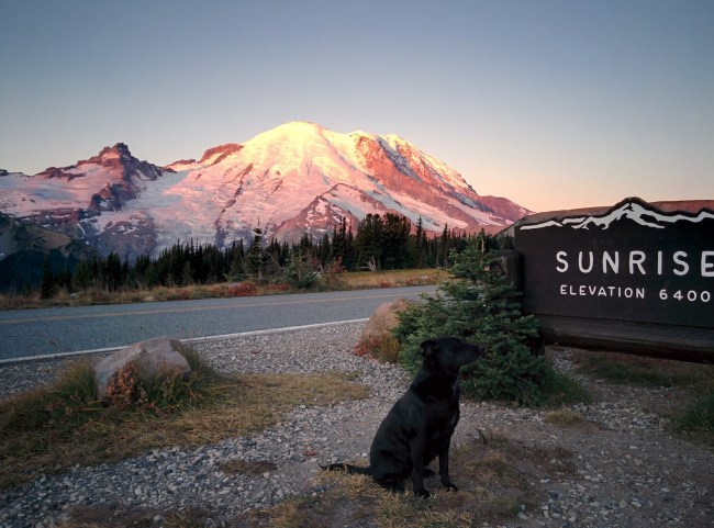 Willow sitting next to the sunrise sign (again) as the first rays of the morning sun touch the top of Mt. Rainier