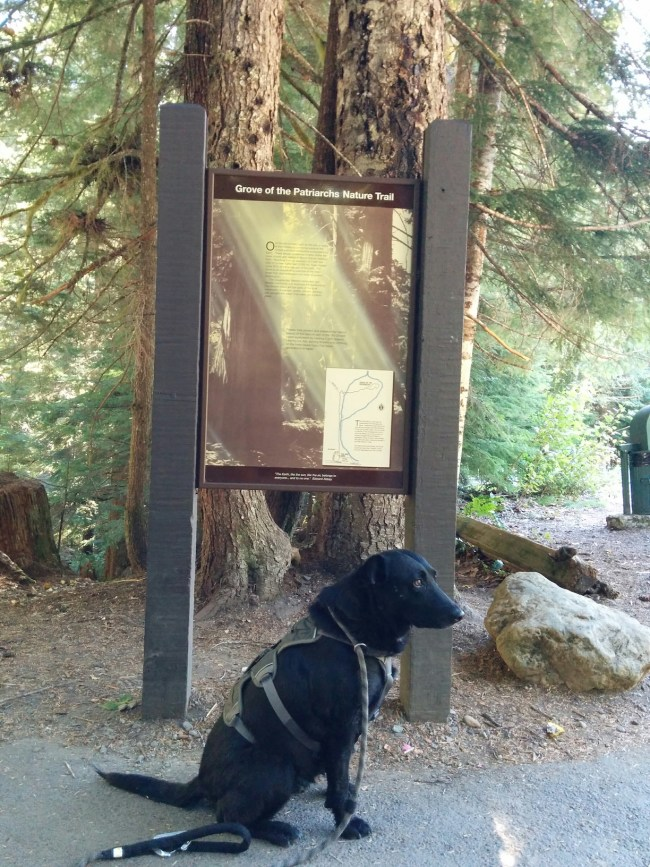 Willow sitting next to the Grove Of The Patriarchs Trailhead sign