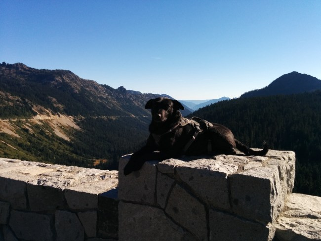 Willow sitting on a roack wall At The Overlook Across The Road From Chinook Pass Overlook Trailhead