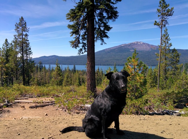Picture of Willow at a rest stop looking out over Diamond Lake And Mt. Bailey In The Background