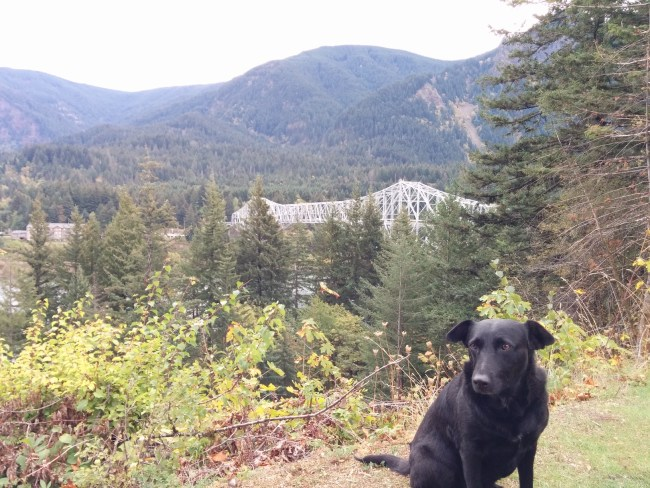 Willow sitting at the overlook with the Bridge of the Gods in the background