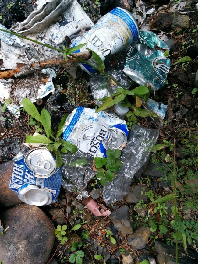 crushed cans of Busch and Keystone Lite beer littered in the forest