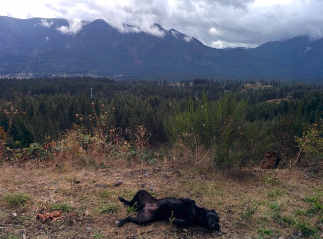 Willow rolling on the ground scratching her back as storm clouds begin clearing over the Columbia River Gorge Valley