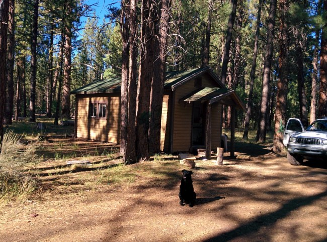 Willow In Front Of The Cabin
