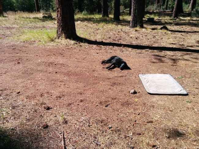 Willow lazing in the red dirt, totally ignoring her bed 2 feet away