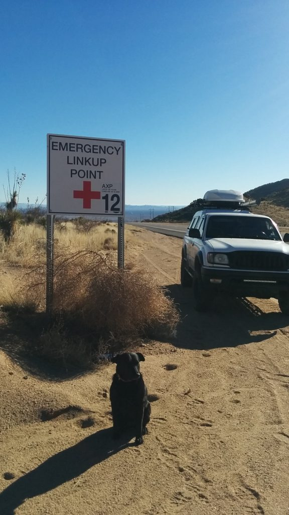 Willow sitting in front of an Emergency Linkup Point Sign