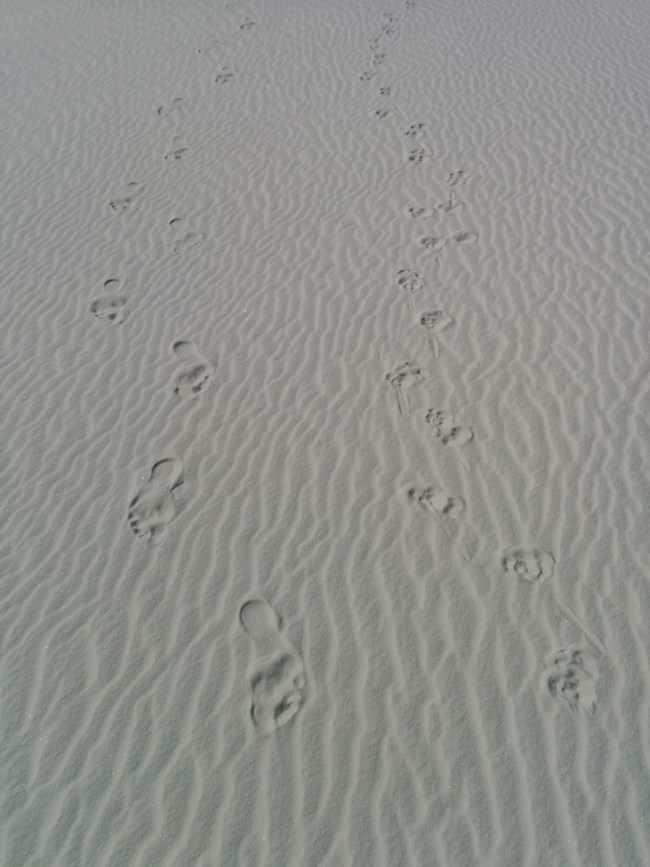 Canine and human bare feet tracks side-by-side in the white sands
