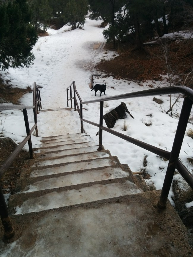 Willow waiting for me at the bottom of a set of icy stairs