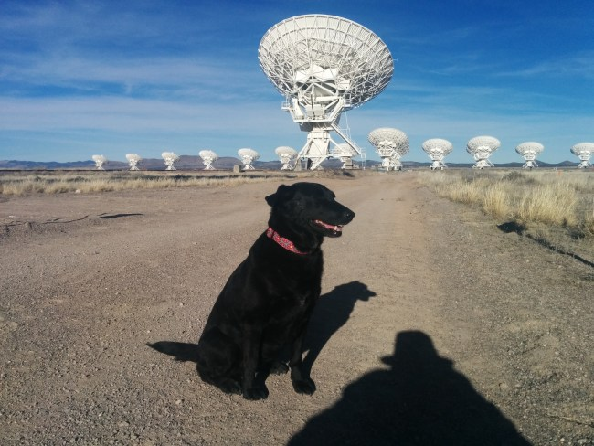 Willow sitting with the VLA in D configuration in the background