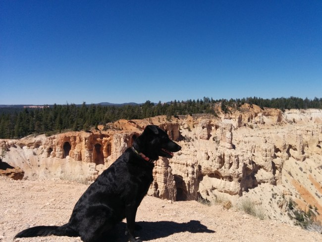 Willow at One Of The Bryce Point Vistas