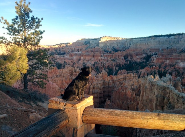 Willow sitting on a fence Near Sunset At Sunset Point