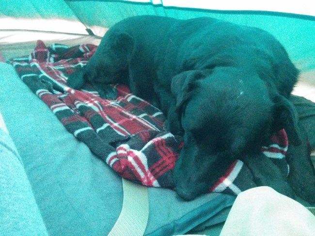 Willow asleep in the tent