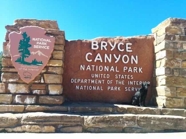 Willow at the Bryce Canyon National Park entrance sign