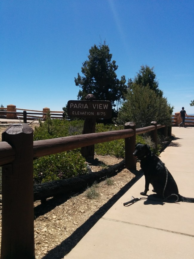 Willow at the Paria View sign
