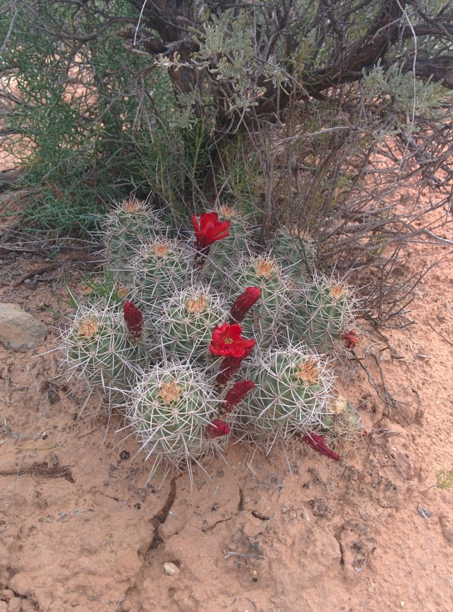 interesting cactus with bright red flowers