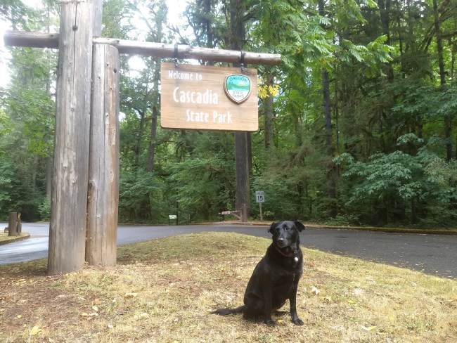 Willow in front of the Cascadia Park Sign