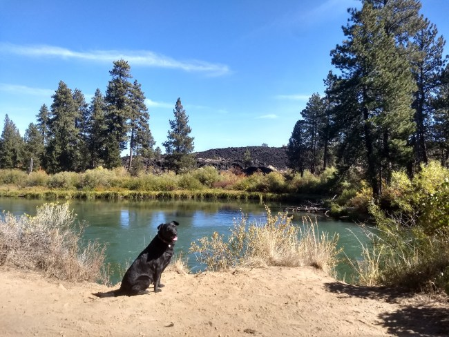 Willow sitting on the trail with the Deschutes River and ancient lava flow behind her