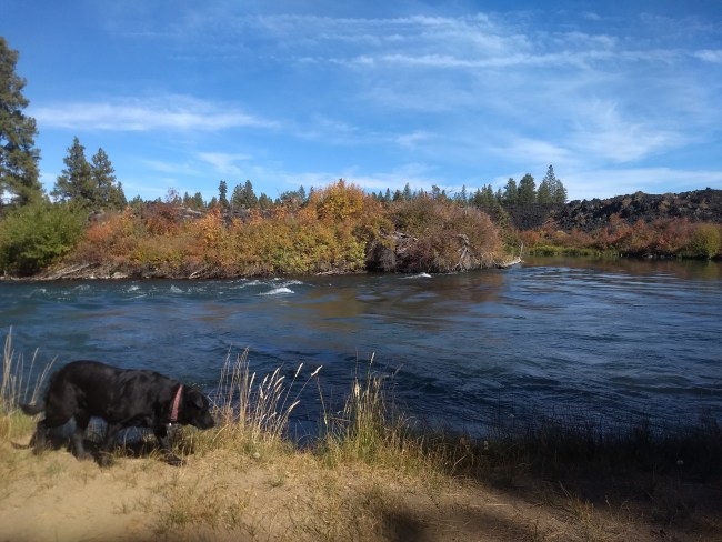 Willow at the edge of the Deschutes River with the tip of Lava Island in the middle of the river behind her
