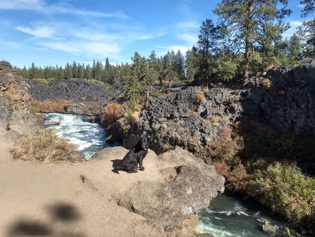 Willow sitting on a rock outcrop over the Deschutes River below Dillon Falls