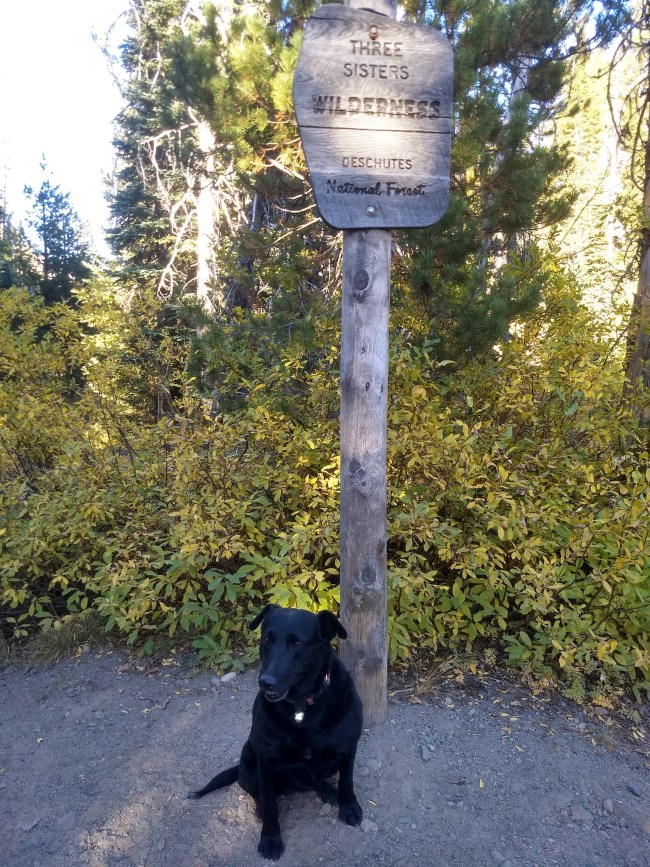 Willow sitting at the base of the Three Sisters Wilderness sign