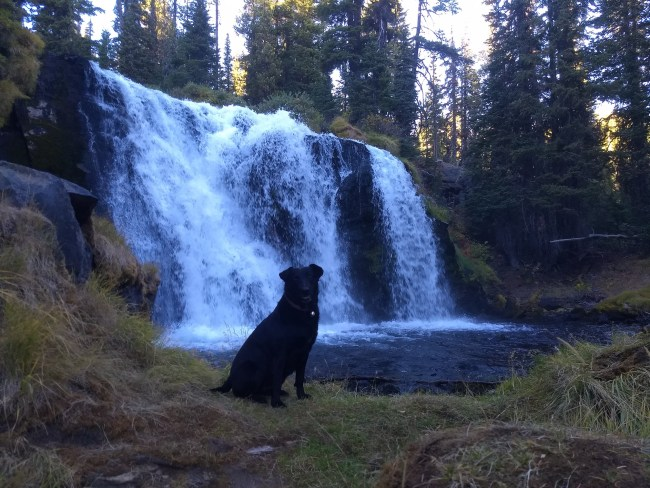 Willow sitting in front of Fall Creek Falls