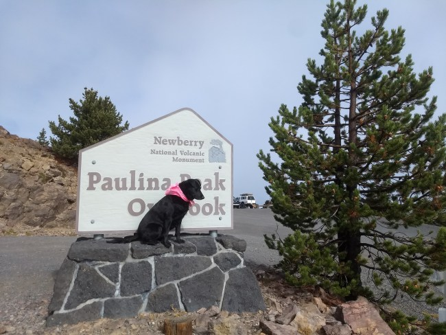 Willow sitting on the rock base and blocking the Paulina Peak Overlook sign